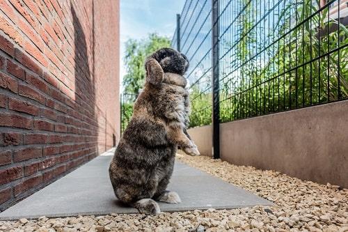 4 tips dieren helpen overwinteren in jouw tuin